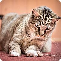 Adopt A Pet :: Tiger & Kibby - Novato, CA