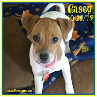 Adopt A Pet :: Casey In Victoria, Texas - Houston, TX