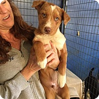 Adopt A Pet :: River in CT - Manchester, CT