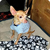 Adopt A Pet :: Pancho - Indianapolis, IN