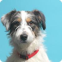 Adopt A Pet :: Max - Carlisle, TN