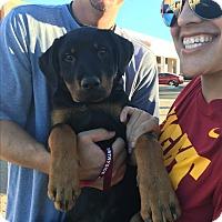 Adopt A Pet :: Tracker - Gilbert, AZ