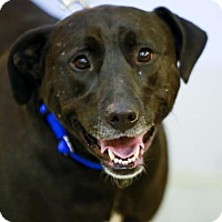 Adopt A Pet :: Roxy - Kettering, OH