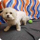 Adopt A Pet :: KAYLA