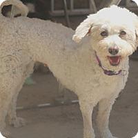 Adopt A Pet :: Carmella - Woonsocket, RI