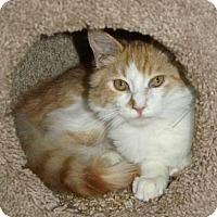 Adopt A Pet :: Beau - Englewood, FL