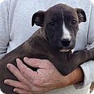 Adopt A Pet :: Onyx (10 lb)