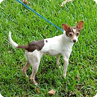 Adopt A Pet :: FLACO - Houston, TX