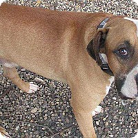 Adopt A Pet :: Marley - Clear Lake, IA