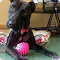 Adopt A Pet :: Kylie - New Port Richey, FL
