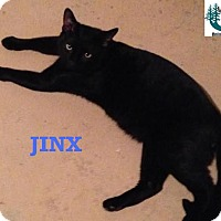 Adopt A Pet :: Jinx - Social Butterfly! - Huntsville, ON
