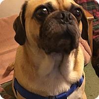 Adopt A Pet :: Ricky - Huntingdon Valley, PA