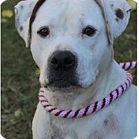 Adopt A Pet :: PETUNIA/spayed - Red Bluff, CA