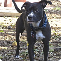 Adopt A Pet :: Snoopy Boy - Scottsdale, AZ