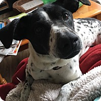 Adopt A Pet :: Missy - Hagerstown, MD