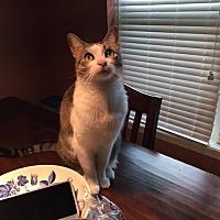 Adopt A Pet :: Amelie - Baton Rouge, LA