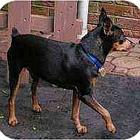Adopt A Pet :: Spanky - Summerville, SC