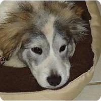 Adopt A Pet :: Honey - Arlington, TX