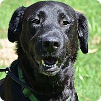Adopt A Pet :: Ashley *look at her smile - Brattleboro, VT