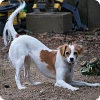 Adopt A Pet :: Judy - Conway, AR