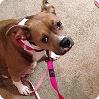 Adopt A Pet :: Baby Girl Tasha - Nashville, TN
