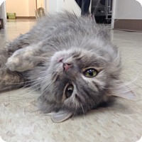 Adopt A Pet :: Stormy - Trevose, PA