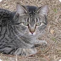 Adopt A Pet :: Jack - Mobile, AL