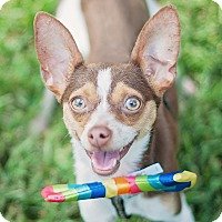 Adopt A Pet :: Snickers - Kingwood, TX