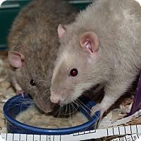 Adopt A Pet :: Ulysses/Aeneas - Greenwood, MI