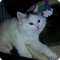 Adopt A Pet :: Puff - Caistor Centre, ON