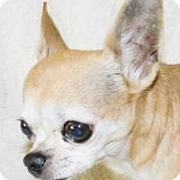 Adopt A Pet :: Paco - Umatilla, FL