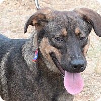 Adopt A Pet :: Scout - Marble Falls, TX