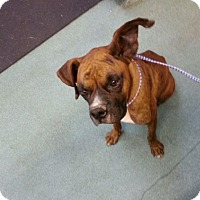 Adopt A Pet :: Cookie - Brentwood, TN
