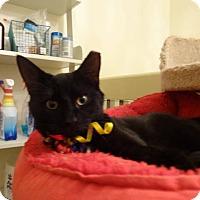 Adopt A Pet :: Double Fudge - Colmar, PA