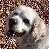 Adopt A Pet :: Monty - Henderson, NV