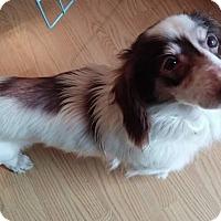 Adopt A Pet :: Jefferson - New Oxford, PA