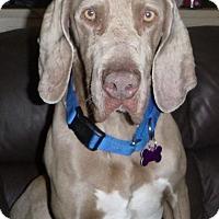 Adopt A Pet :: Rufus - Rolling Hills Estates, CA