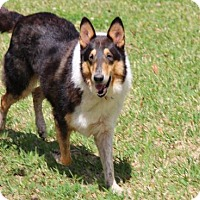 Adopt A Pet :: Jasper *New* - Stafford, TX