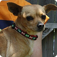 Adopt A Pet :: Sadie - Joplin, MO