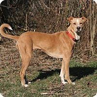 Adopt A Pet :: Katie - Nicholasville, KY