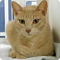 Adopt A Pet :: Kitana - Topeka, KS