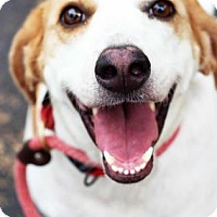 Adopt A Pet :: Chanel - Atlanta, GA