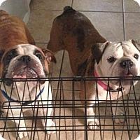 Adopt A Pet :: Doogie & Mira - Odessa, FL