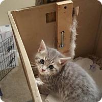 Adopt A Pet :: Sammy - Florence, KY
