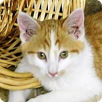 Adopt A Pet :: Cashew - Montgomery City, MO