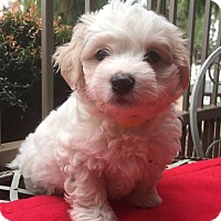 Adopt A Pet :: Mint - Santa Ana, CA