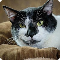 Adopt A Pet :: FROYD - Bloomfield, NJ