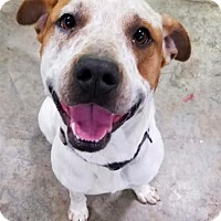 Adopt A Pet :: Buddy - Brunswick, OH