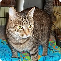 Adopt A Pet :: Sierra - Acme, PA