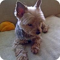 Adopt A Pet :: Tigger - Columbus, OH